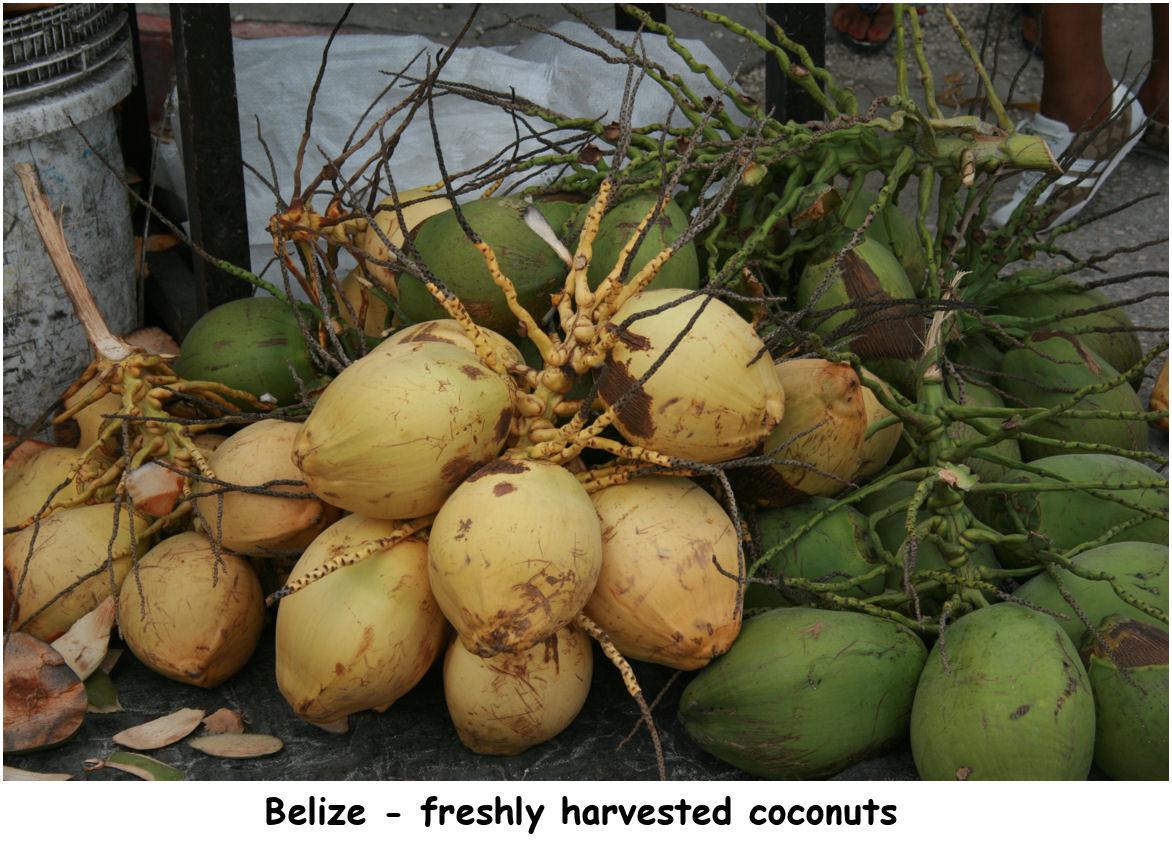 coconuts00