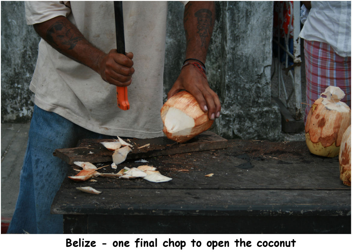 coconuts05